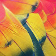 Parrot Feathers Print by Flash Parker