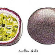 Passiflora Edulis Fruit Print by Steve Asbell