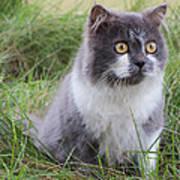 Persian Cat Sit In Green Yard Print by Nawarat Namphon