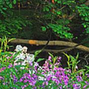 Phlox Along The Creek 7185 Print by Michael Peychich