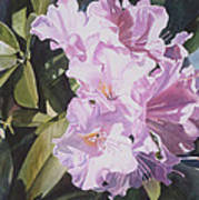 Pink Rhododendron Print by Sharon Freeman