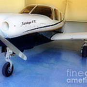 Piper Saratoga Print by Cheryl Young