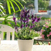 Plastic Lavender Flowers  Print by Nawarat Namphon