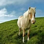 Pony On Mykines Print by © Rune S. Johnsson