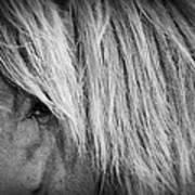 Portrait Of A Wild Horse Print by Bob Decker