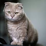 Portrait Of Cat Print by LeoCH Studio