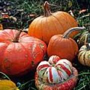 Pumpkin Patch Print by Kathy Yates