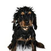 Puppy Bathtime Print by Jane Rix