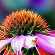 Purple Coneflower Delight Print by Bill Tiepelman