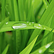 Rain Drops On Grass Print by Trever Miller