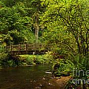 Rain Forest Bridge Print by Adam Jewell