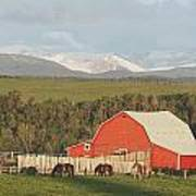 Red Barn With Horses Grazing Print by Michael Interisano