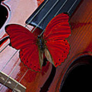 Red Butterfly On Violin Print by Garry Gay