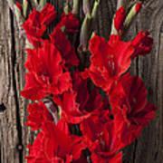 Red Gladiolus Print by Garry Gay