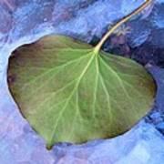 Reverse Ivy On Blue Print by Beth Akerman