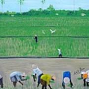 Rice Field Haiti 1980 Print by Nicole Jean-Louis
