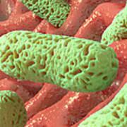Rod-shaped Bacteria, Artwork Print by David Mack