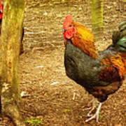 Rooster Farm Print by Yvon van der Wijk
