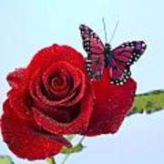 Rose Red Butterfly Isolated On Blue Print by M K  Miller