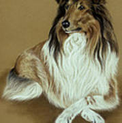 Rough Collie Print by Patricia Ivy