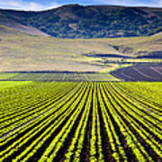 Rural Landscape With Planted Crops Print by David Buffington