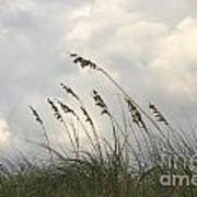 Sea Oats Print by Blink Images