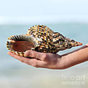 Seashell In Hand Print by Elena Elisseeva