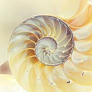 Seashell. Light Version Print by Jenny Rainbow