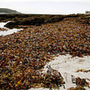 Seaweed Covered Beach Print by Dr Keith Wheeler
