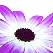Senetti Magenta Bi-colour Print by Richard Thomas