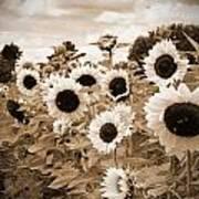 Sepia Sunflower Field Print by Debbra Obertanec