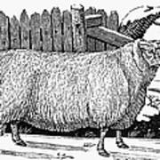Sheep, 1788 Print by Granger