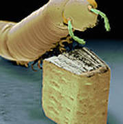Smallest Book And Millipede, Sem Print by Volker Steger