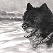 Snow Dog Print by Kathleen Kelly Thompson