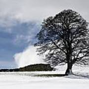 Snowy Field And Tree Print by John Short