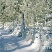 Snowy Footpath In Winter Wonderland Print by Heiko Koehrer-Wagner