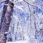 Snowy Path Print by Rob Travis