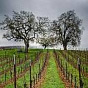 Sonoma County Vineyard Print by Joan McDaniel