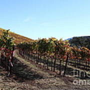 Sonoma Vineyards - Sonoma California - 5d19311 Print by Wingsdomain Art and Photography