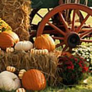 Southern Harvestime Display Print by Kathy Clark