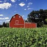 Soybean Field And Red Barn Near Anola Print by Dave Reede