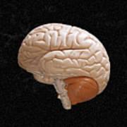 Space Brain Print by Richard Newstead