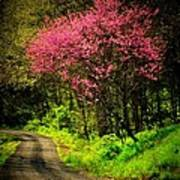 Spring Mountain Road Print by Michael L Kimble