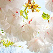 Spring White Pink Tree Flower Blossoms Print by Baslee Troutman