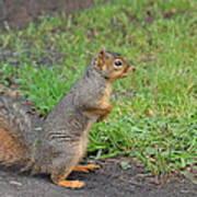 Squirrel Print by Linda Larson