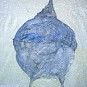Stellar Jay From  Back Print by Debbi Chan