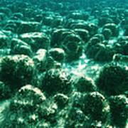 Stromatolites Print by Peter Scoones