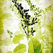 Study In Green Print by Judi Bagwell