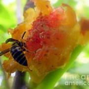 Succulent Fig Print by Karen Wiles