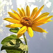 Sunflower Print by Marilyn Sargent